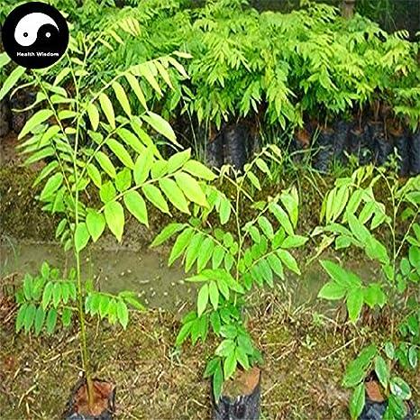 Amazon Com Buy Rare Scented Rosewood Tree Seeds 80pcs Plant