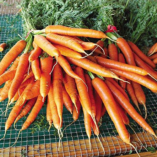 Seeds of Change 06067 Certified Organic Carrot, Garden