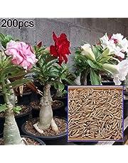 pittospwer 200Pcs Adenium Semi di Fiori di Rosa del Deserto Decorazioni per Piante da Balcone da Giardino perenni