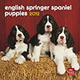 English Springer Spaniel Puppies 2012 7X7 Mini Calendar by BrownTrout Publishers Inc (2011-07-15)