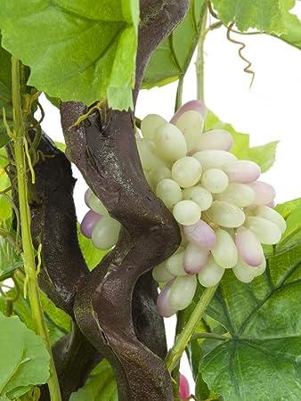 EUROPALMS Viñero con uvas, 160cm: Amazon.es: Electrónica