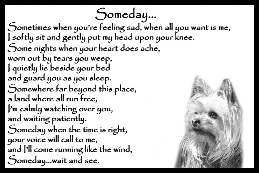 Yorkshire Terrier pet loss memorial bereavement gift - Someday CountryStyle Photography