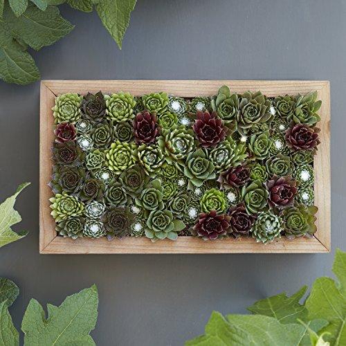 Succulent Gardens Medium Living Picture Planter DIY Kit, 6'' x 12'' Frame, Multicolor by Succulent Gardens (Image #6)