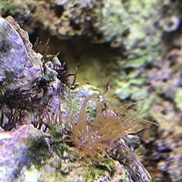 Red Sea Aiptasia X 60ml Amazon Co Uk Pet Supplies