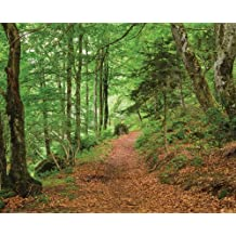 JP London MD4A047 Forest Trail Removable Full Wall Mural at 8.5-Feet Tall by 10.5-Feet Wide