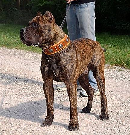 Collar de Perro marrón Eros Beige, Razas Grandes, Raza de Perro ...