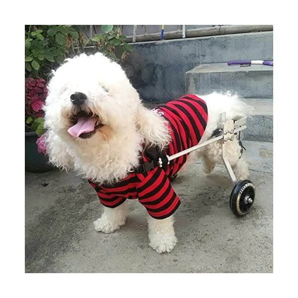 Anmas Sport Adjustable Dog Pet Wheelchair, Hind legs Rehabilitation (L-Hip Height: 13″-16″, Weight:20-40lbs) Click on image for further info. 2