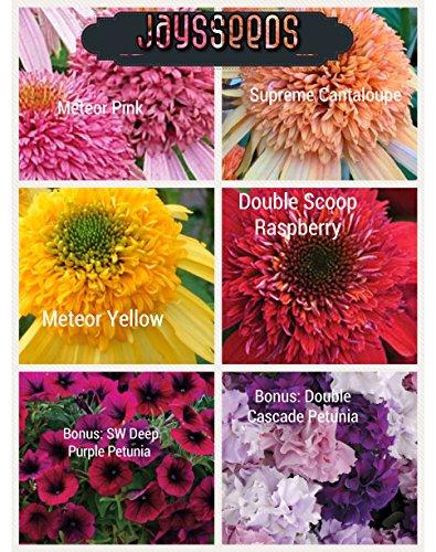 Bulk 4 Coneflower Seeds (Echinacea) 500 Seeds Upc 60018819034 Bonus Petunias