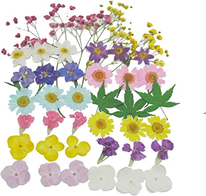 Uokwiwi Real Natural Dried Pressed Flowers Mixed Multiple Colorful Daisies Leaves Hydrangeas for Resin Art Craft DIY 35 PCS Color 6