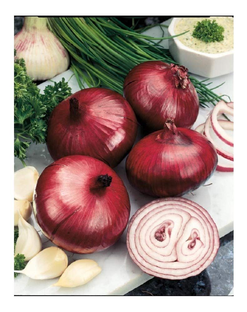Organic Onion RED Baron 200 Finest Seeds Premier Seeds Direct