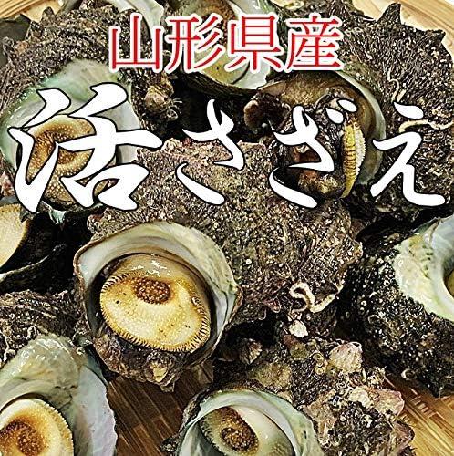 サザエ 1kg (14~18個) 山形県産 冷蔵 バーベキュー 海鮮 さざえ 刺身 生食用 お中元