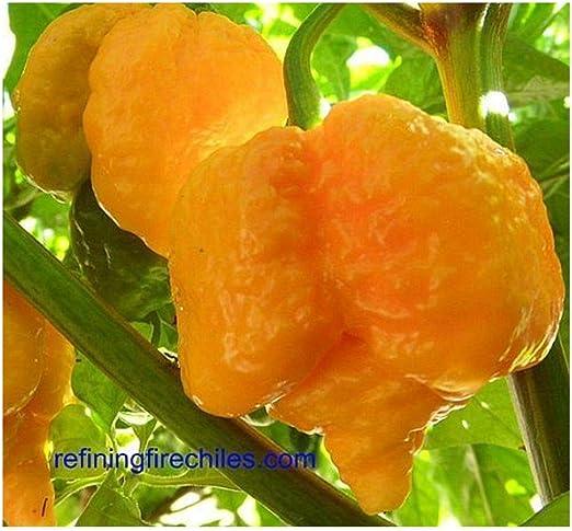 50 graines-Trinidad 7-pot jaune piment