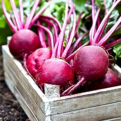 Ruby Queen Beet Seeds - Non-GMO, Heirloom - Vegetable Garden, Root Crop, Microgreens, Canning, Pickling