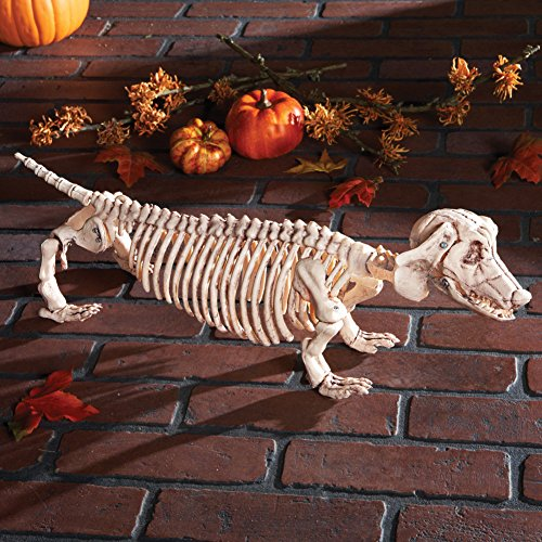 Animated Zombie Cat (Halloween Posable Skeleton Spooky Scary Haunted House Prop Decoration (dachshund))
