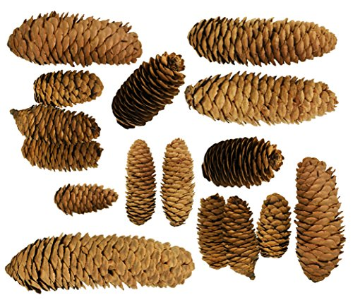 Decorative Pinecones Perfect as Vase Fillers, Table Scatter, Crafts, All of Your Creative Needs (10.8 Ounces) (Pine Cone Vase)