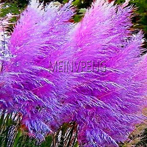 (Flower Plant - Lowest Price!300 Purple Bonsai Grass Plant for Garden Planting Flower,#djrxlf)