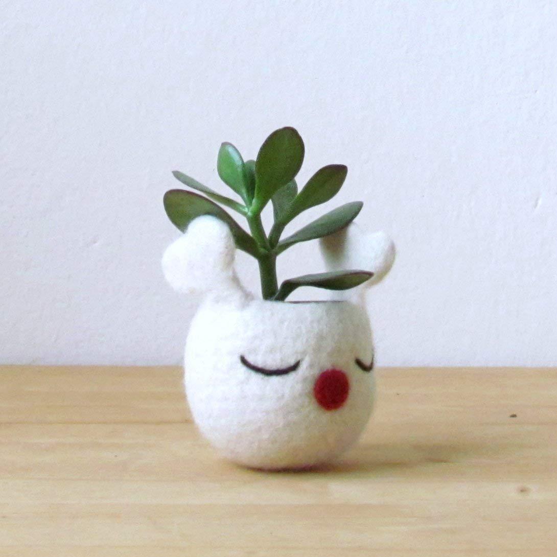 Christmas Succulent Gift Ideas.Amazon Com Christmas Gift Idea Succulent Planter White Felt