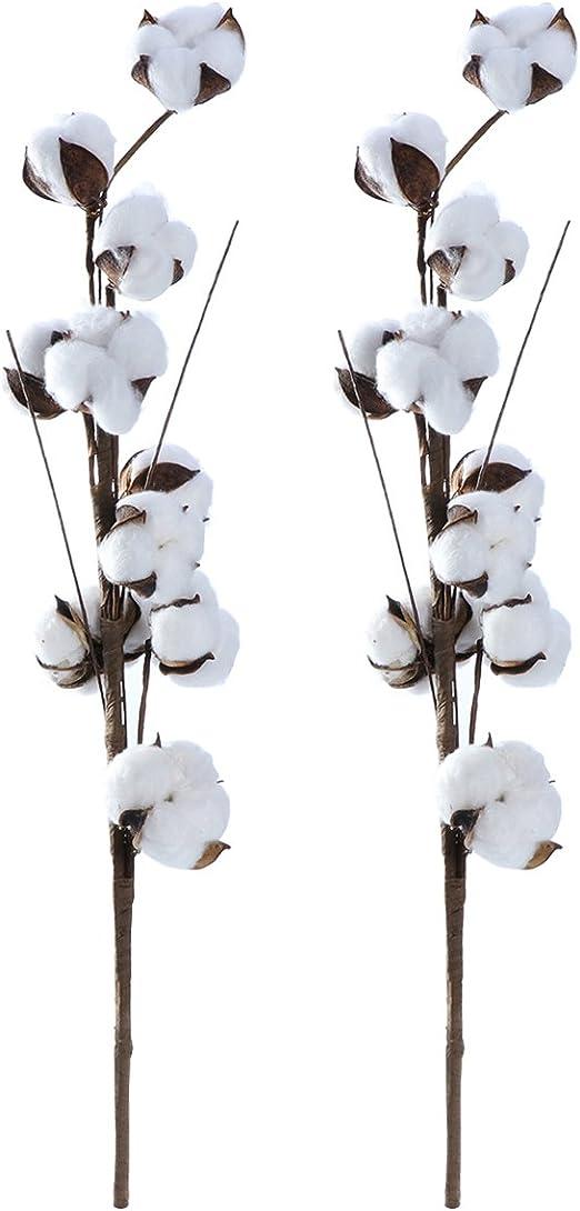 healifty 2 pcs 56 cm séchées de algodón varilla 10 bolls ...