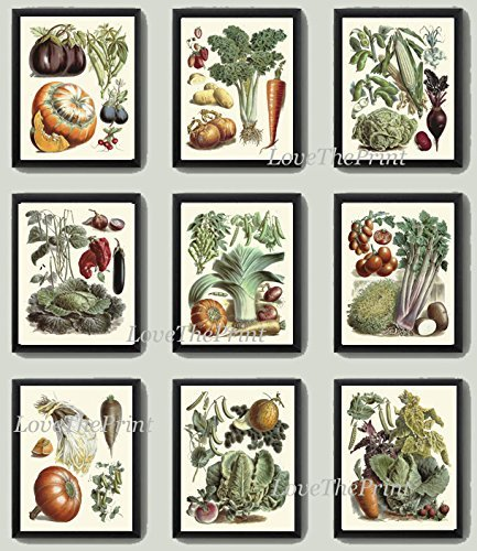 Vegetable  Art Prints Antique Beautiful Eggplant Pumpkin