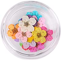 Dried Flowers, BIGBOBA 20Pcs Mini Natural Real Dried FlowersNail Dry Flowers Nail Art Supplies 3D Applique Nail Decoration Sticker for Tips Manicure Decor Dried Flower DIY Tips Stickers Kit