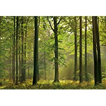 Ideal Décor DM216 Autumn Forest 144-Inch-by-100-Inch 8-panel mural