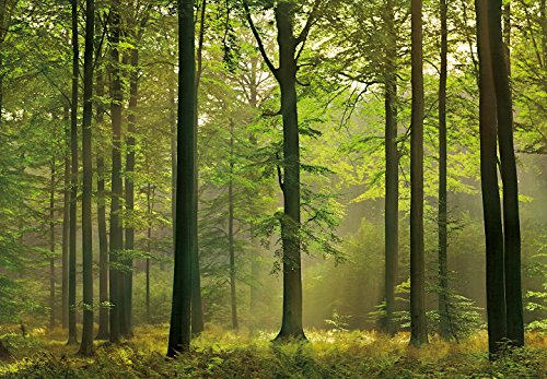 Ideal Décor DM216 Autumn Forest 144-Inch-by-100-Inch 8-panel (8 Panel Mural)
