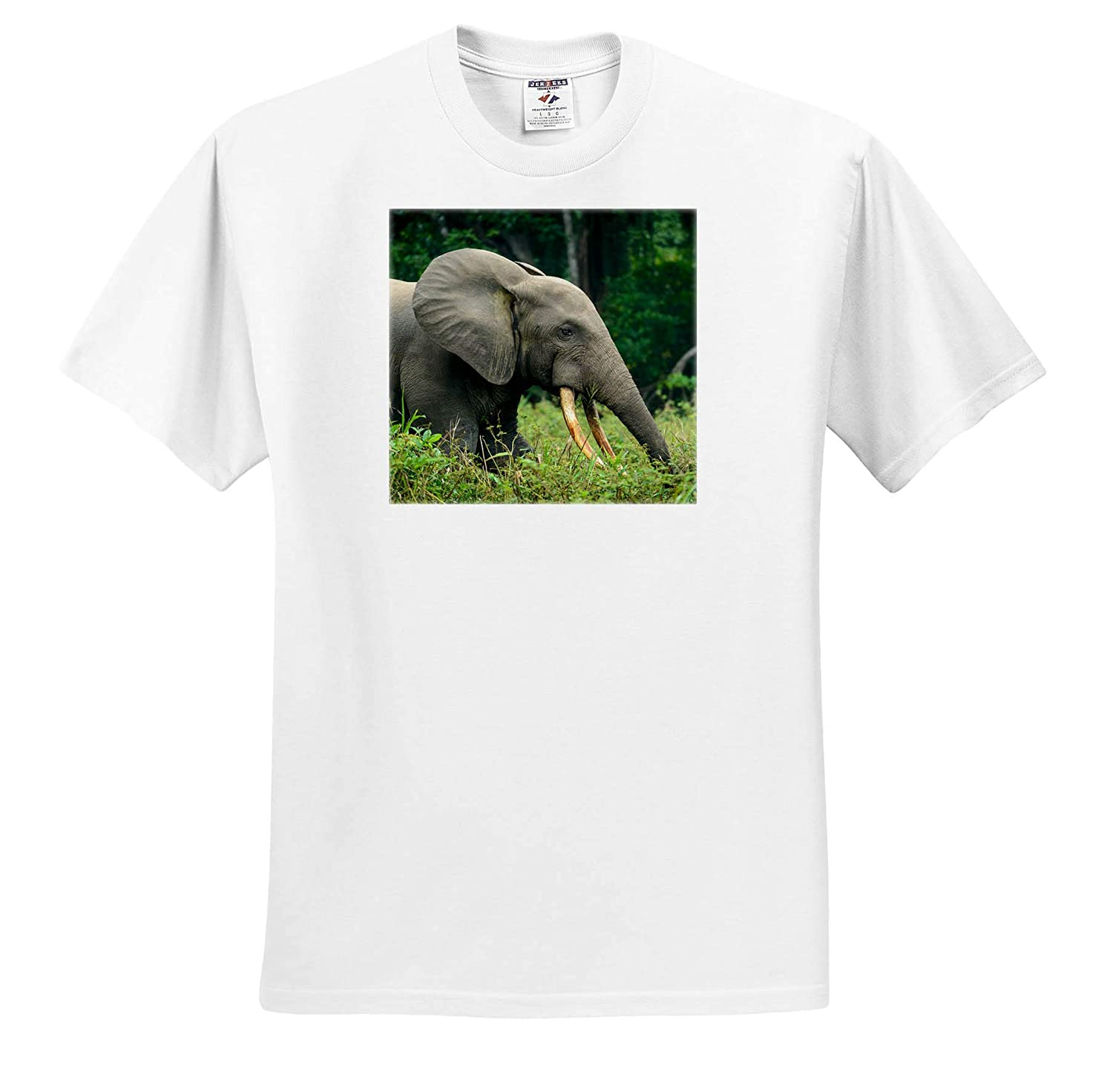 3dRose Danita Delimont African Forest Elephant Elephants - Adult T-Shirt XL Republic of The Congo ts/_310398