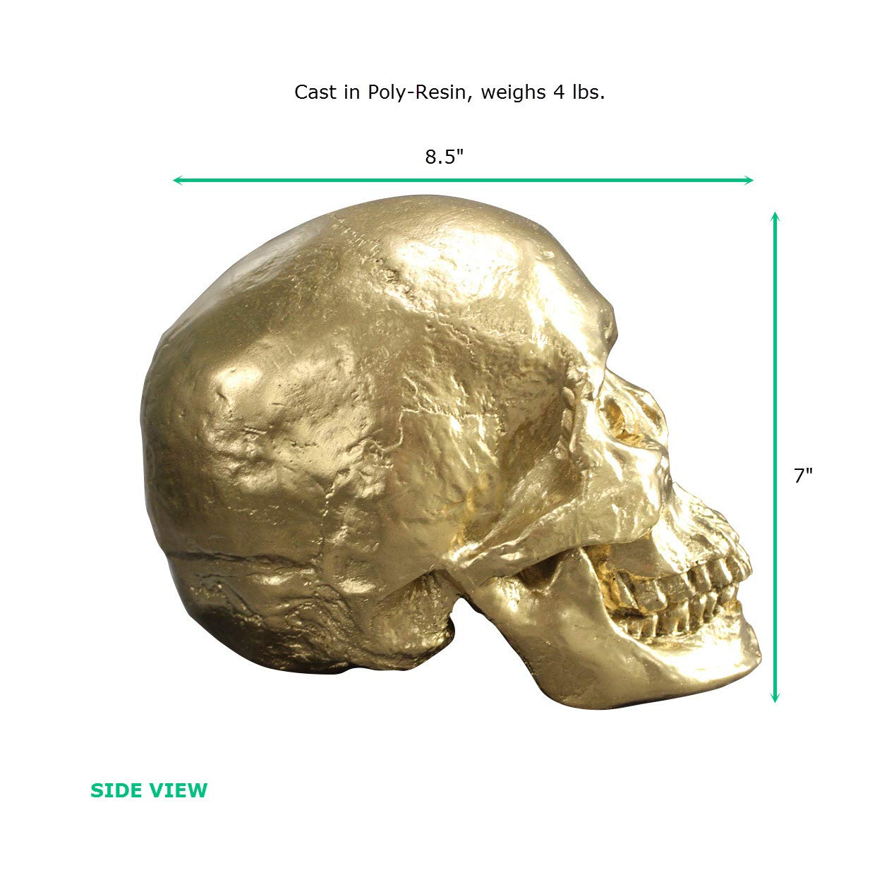 Wall Charmers Life Size Human Skull - 8.5'' Gold Faux Human Anatomy - Table Top Skeleton Head Home Decor by Wall Charmers (Image #4)