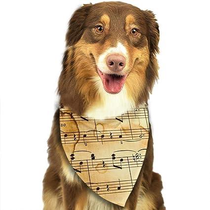 Amazon Smile Service Pet Music Note Birthday Decorations Kit