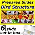 Prepared Slides: Bird Structure from UKGE
