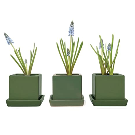 Surprising Chive Set Of 3 Modern Square Succulent Cactus Pot And Saucer 3 Ceramic Flower And Planter Pot With Drainage Hole Saucer Mini Pot For Home Remodeling Inspirations Basidirectenergyitoicom