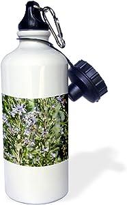 """3dRose """"Honey Bee on Rosemary Blossom bee, blossom, flower, honey bee, honeybee, insect, rosemary"""" Sports Water Bottle, 21 oz, White"""