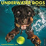 Underwater Dogs 2016 Calendar