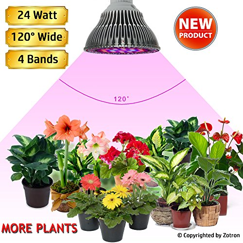 No Light Outdoor Plants