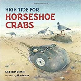 Image result for high tide for horseshoe crabs