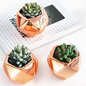 Nattol Mini Rose Gold Succulent Planter, 3 inch Geometric Air Planter Pots, Set of 3
