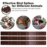 Bird Spikes for Pigeons Small Birds Critters - 16 Feet Bird Repellent Spikes Plastic Bird Deterrent Spikes Anti Bird Spikes Strips-Idea for Fences Walls Railings Sheds Roof(10 Strips)