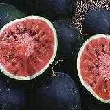 Small Shining Light Watermelon Russian Heirloom Non-GMO Melon Fruit Garden Seeds 15