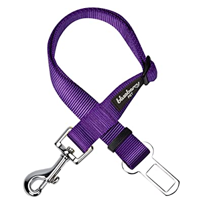 Blueberry Pet Essentials 30+ Colors Classic Solid Color Collection