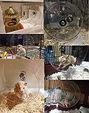 FIRIK Hamster Wheel Pet Toy Pet Comfort Exercise