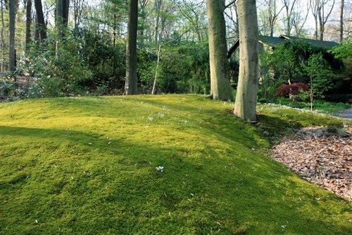 Amazon.com: 100% Live hoja de musgo para jardines de musgo y ...