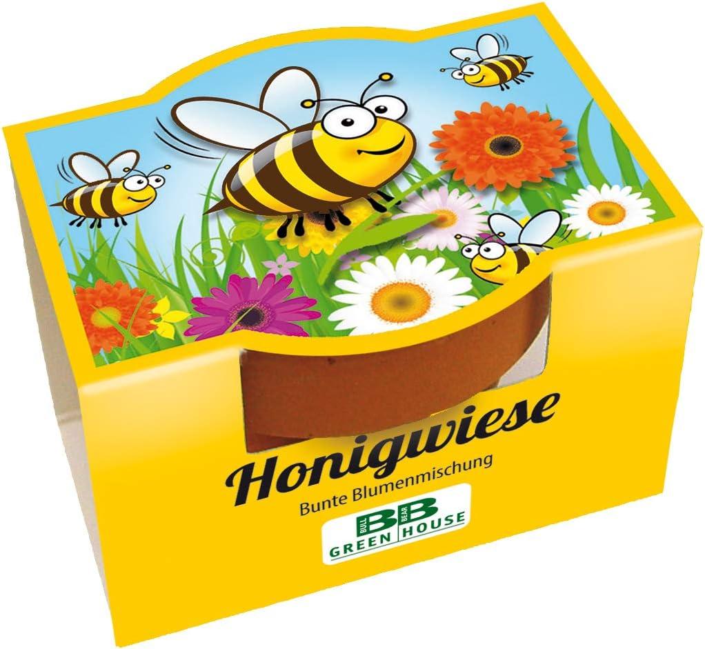 10er Bienen Minipflanzset Honigwiese mit Samen f/ür bunte Bienen Blumen
