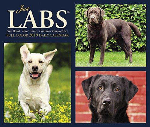 Just Labs - Just Labs 2019 Box Calendar (Dog Breed Calendar)