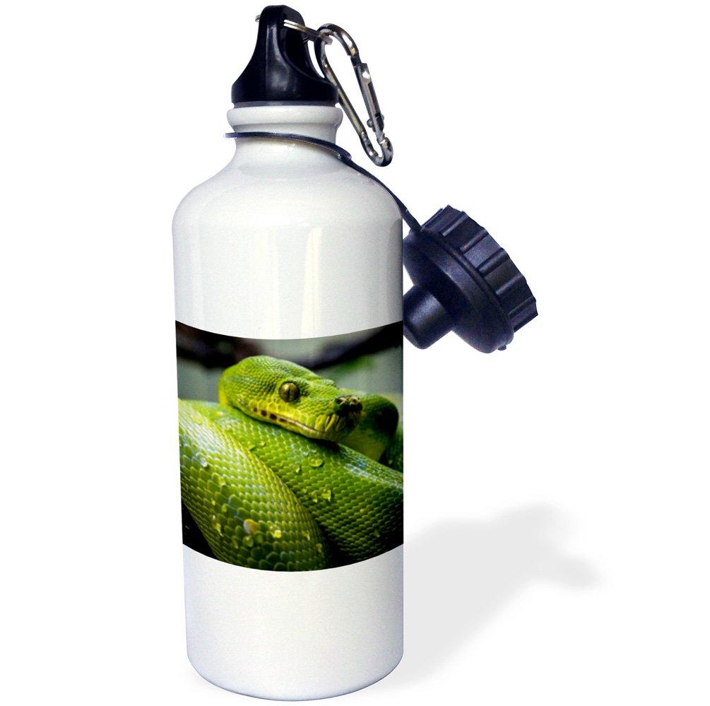 3dRose wb/_236571/_2 Green Python Snake Flip Straw Water Bottle 21 oz White