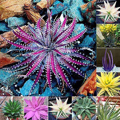 Flower Seeds, Plant Seeds, YESZ 100Pcs Rare Aloe Vera Seeds Succulent Herbal Balcony Garden Potted Bonsai Plant - Assorted Colors Aloe Vera Seeds#