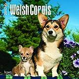 Welsh Corgis 2017 Mini 7x7