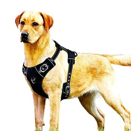 DINGG Arnés de Perro Costuras Reflectantes garantizar la ...