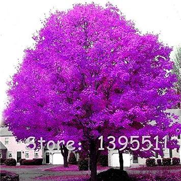 1bag 20 stuck seltene coulerful ahornsamen bonsai baum pflanzen topfgarten japanischer ahorn