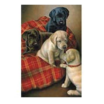 Bandera del perro. Cachorros Labrador. Tiempo de la cama