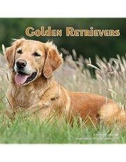 Golden Retrievers Calendar - 2017 Wall calendars - Dog Breed Calendars - Monthly Wall Calendar by Magnum